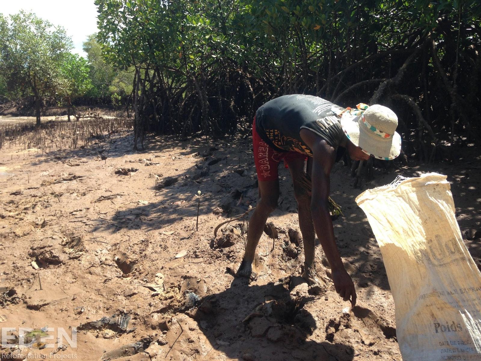 Bag of mangrove saplings and a local tree planter.
