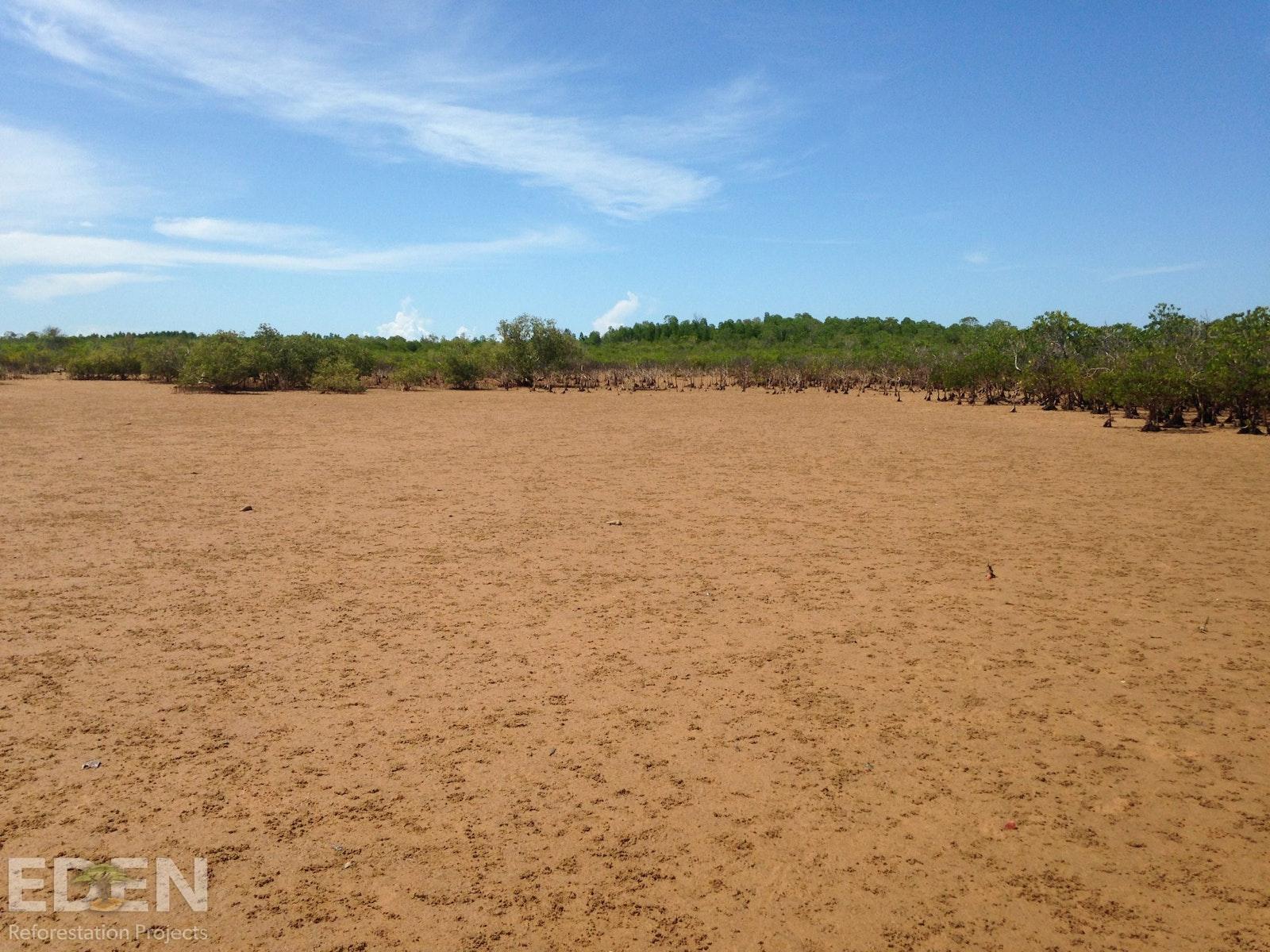 Vast plain of deforested land.