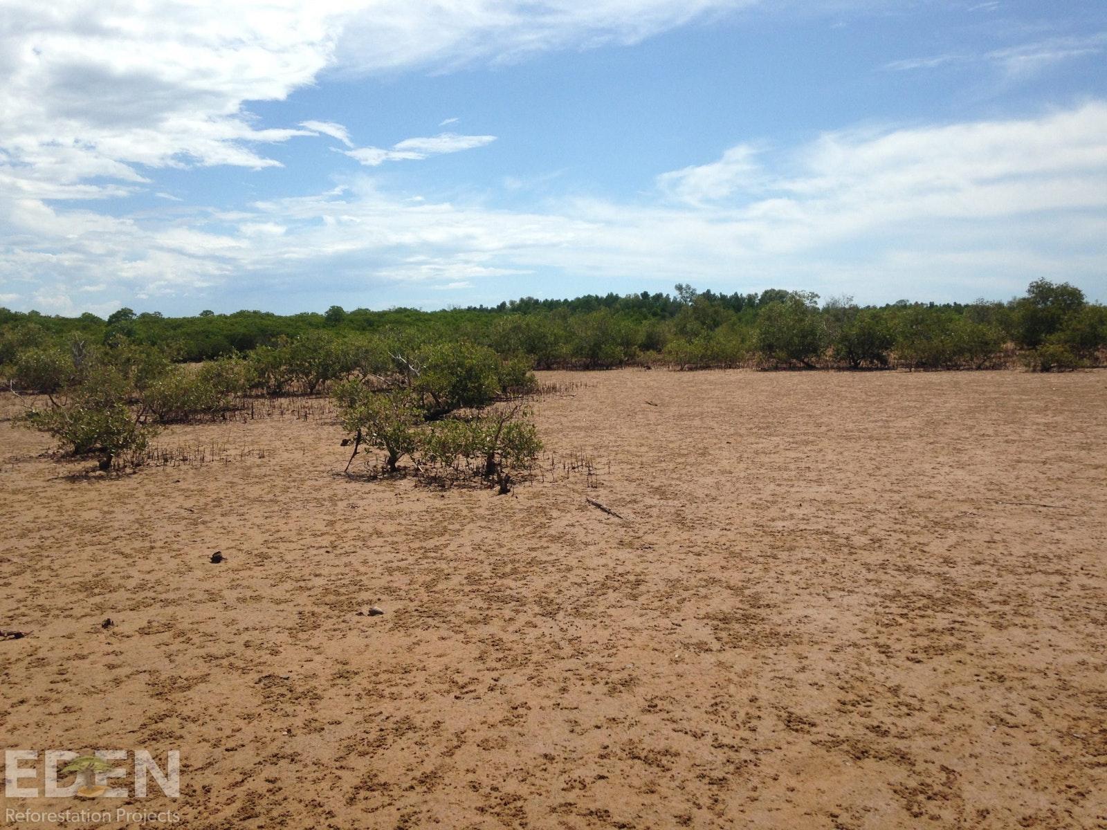 Deforested land.