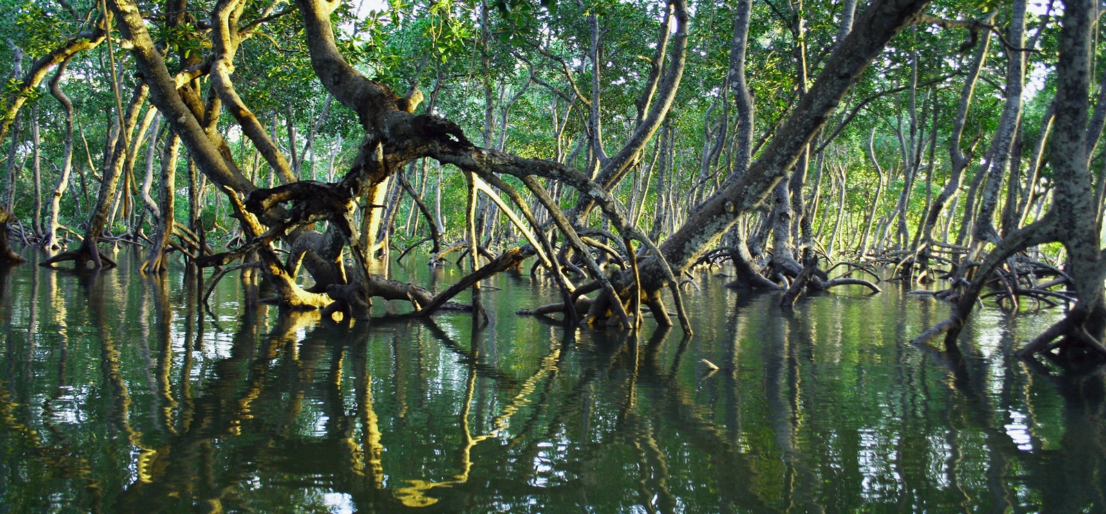 Mangroves with tide in Madagascar