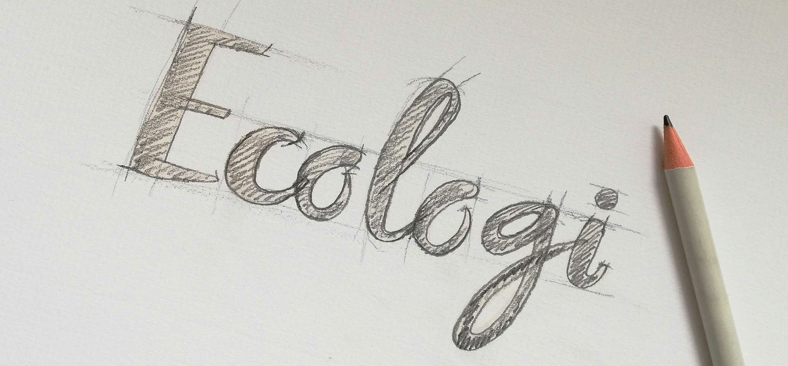 Ecologi logo sketch